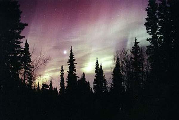 auroramoon_curtis_big